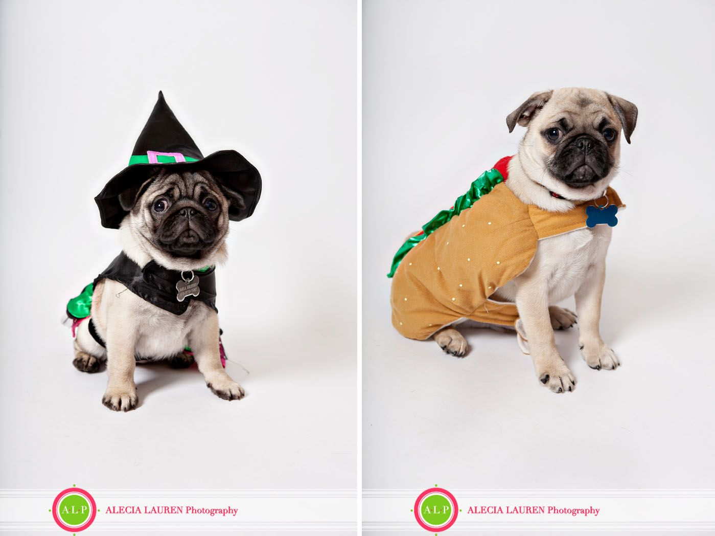 Atlanta Dog Photographer Pug Puppies Atlanta Dogs Dog