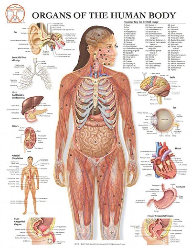 Body Parts Chart Woman : parts, chart, woman, Artificial, Intelligence, CatDrivers.com