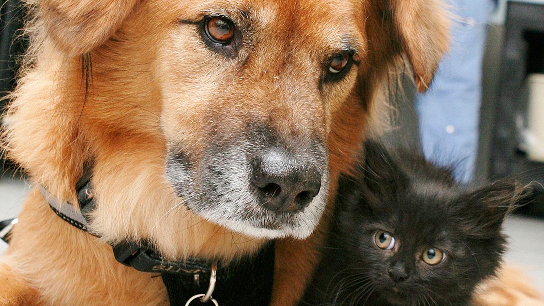 Dog Who Survived Hurricane Katrina Now Calms Arizona Shelter Kittens Shelter Kittens Dogs Golden Retriever