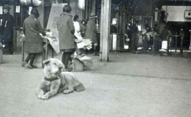 Recuerdan a Hachiko, el leal perro que conmovió a Japón