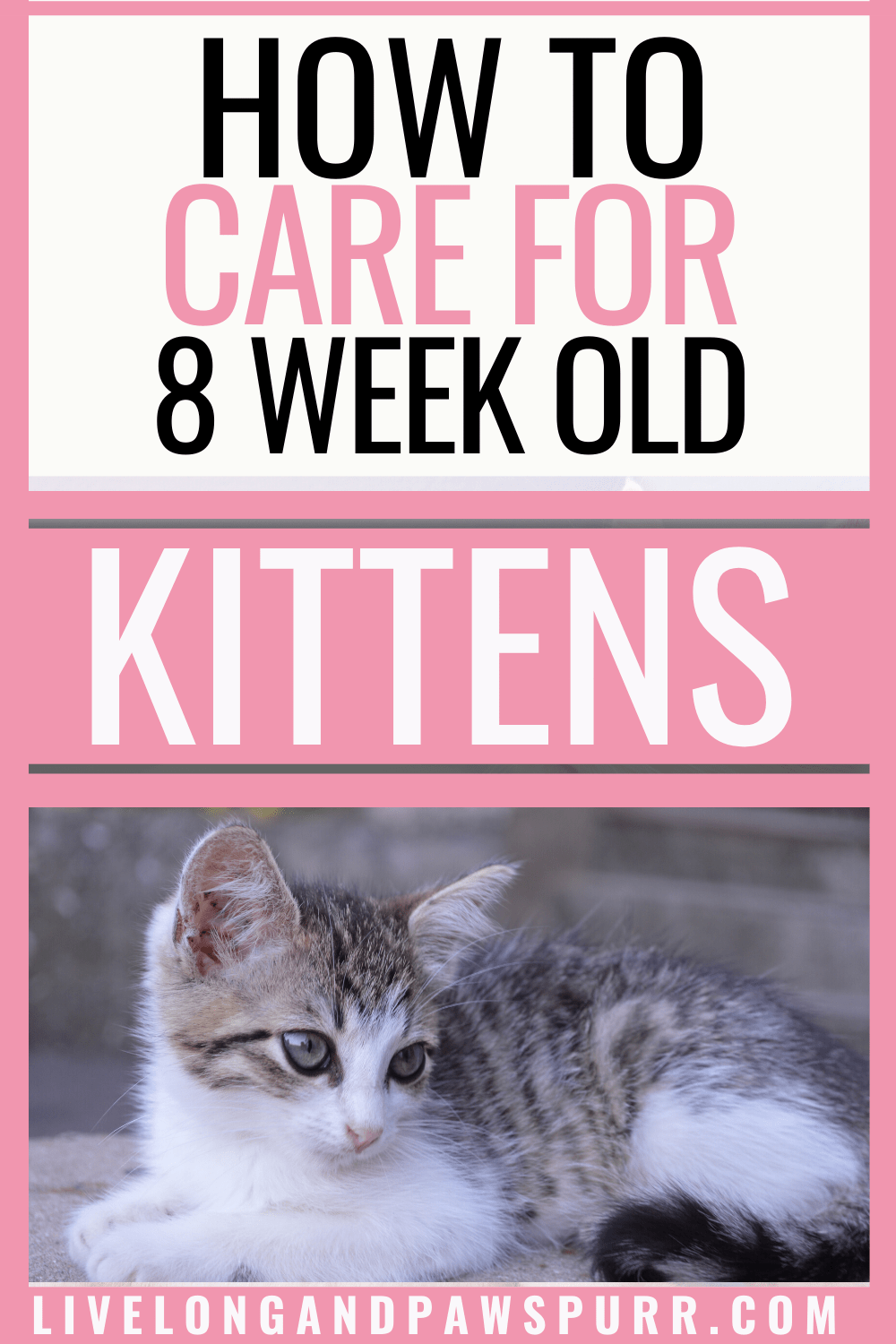 How To Easily Care For 8 Week Old Kittens Live Long And Pawspurr In 2020 Cat Training Kittens Kitten Care