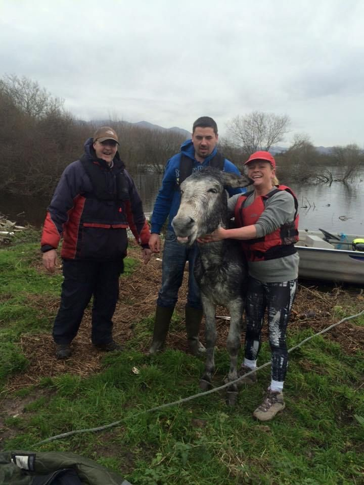 A Rescued Donkey Smiles For The Camera After Being Saved From A Rushing River In Killorglin Ireland Donkey Rescue Animal Rescue Best Dogs