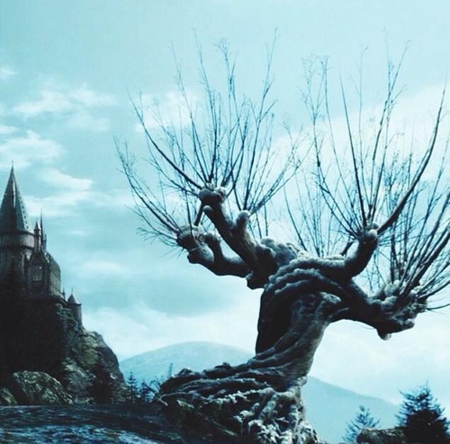 The whomping willow ❤️ trees  #Christmas time  fantasy  hogwarts