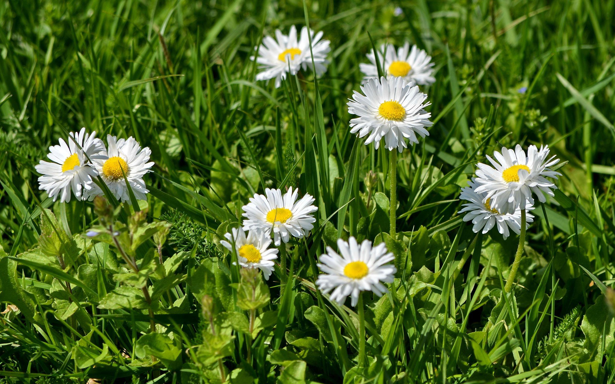 фото цветов в траве продаже загородных домов