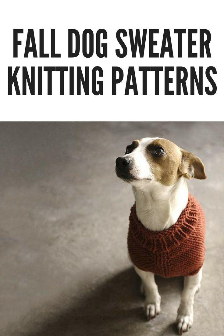 10 Beautiful Fall Dog Sweater Knitting Patterns | Handy