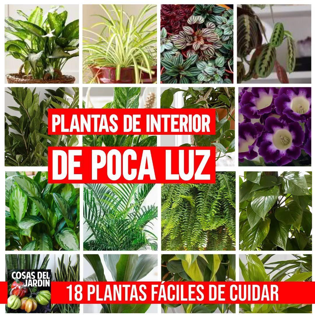 Plantas De Sombra Total Exterior