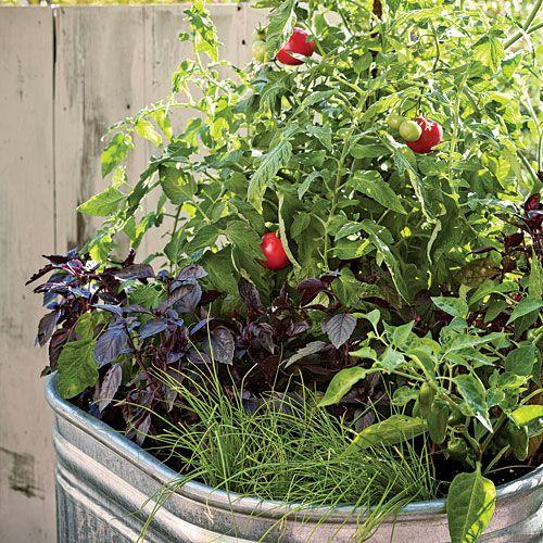 Single Container Vegetable Garden Container Gardening Vegetables