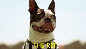 Boston Terrier as a Referee in the New Found Glory Song titled Connect The Dots (Video)