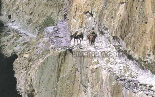 Trekking Leh Ladakh
