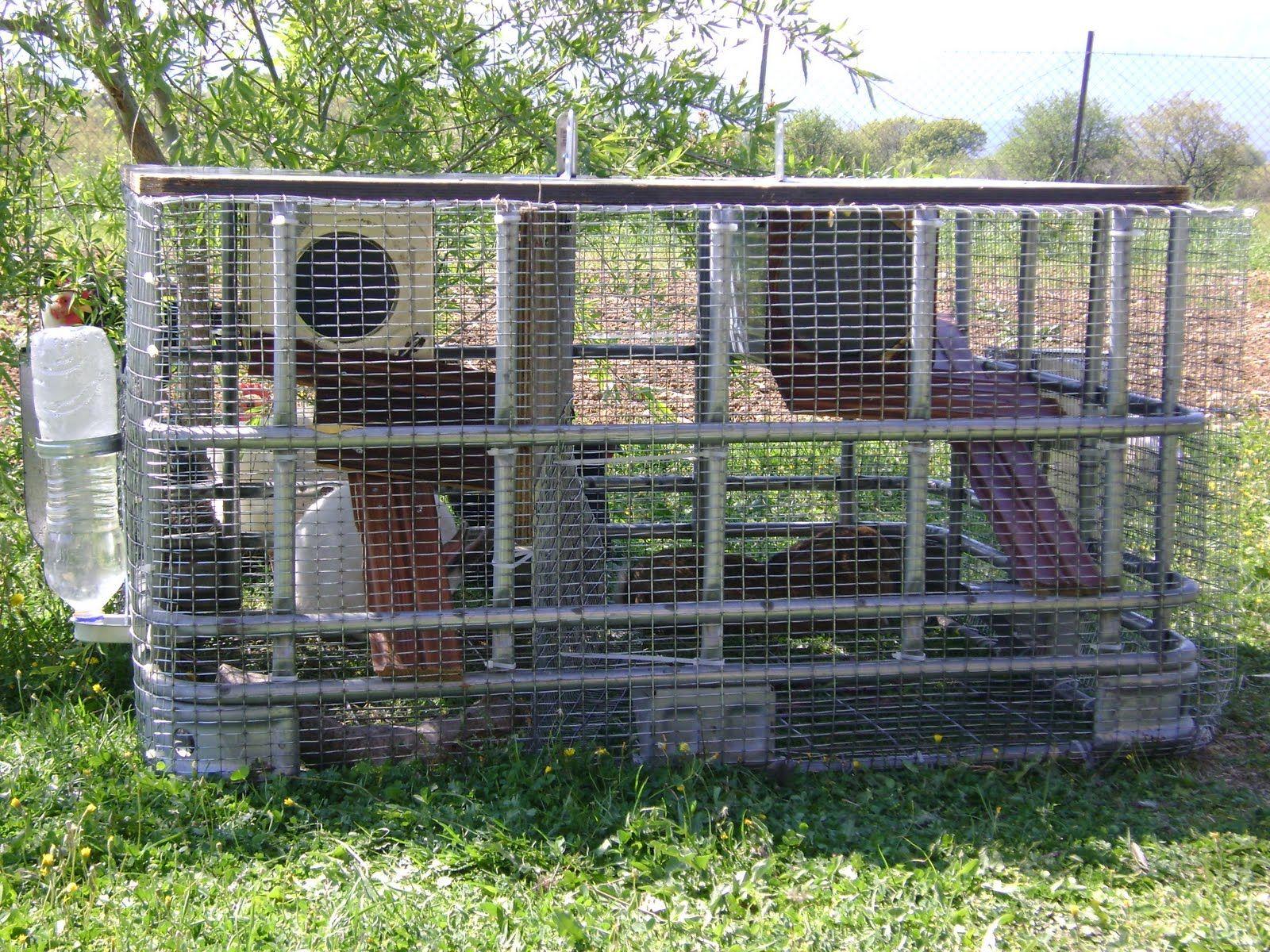 Outdoor rabbit house animals in the garden pinterest for Outdoor rabbit enclosure ideas