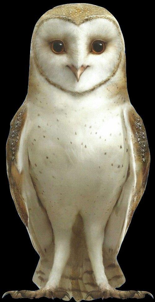 Soren, barn owl | Owls drawing, Guardians of ga'hoole, Owl