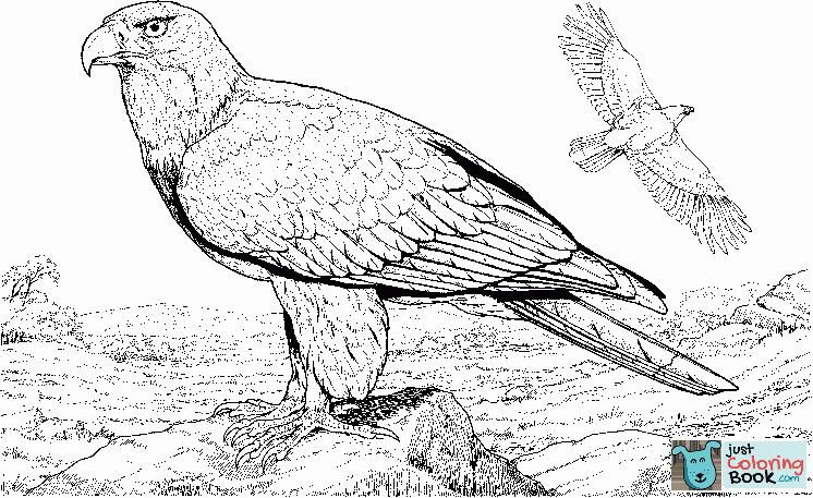 Baby Eagle Coloring Page