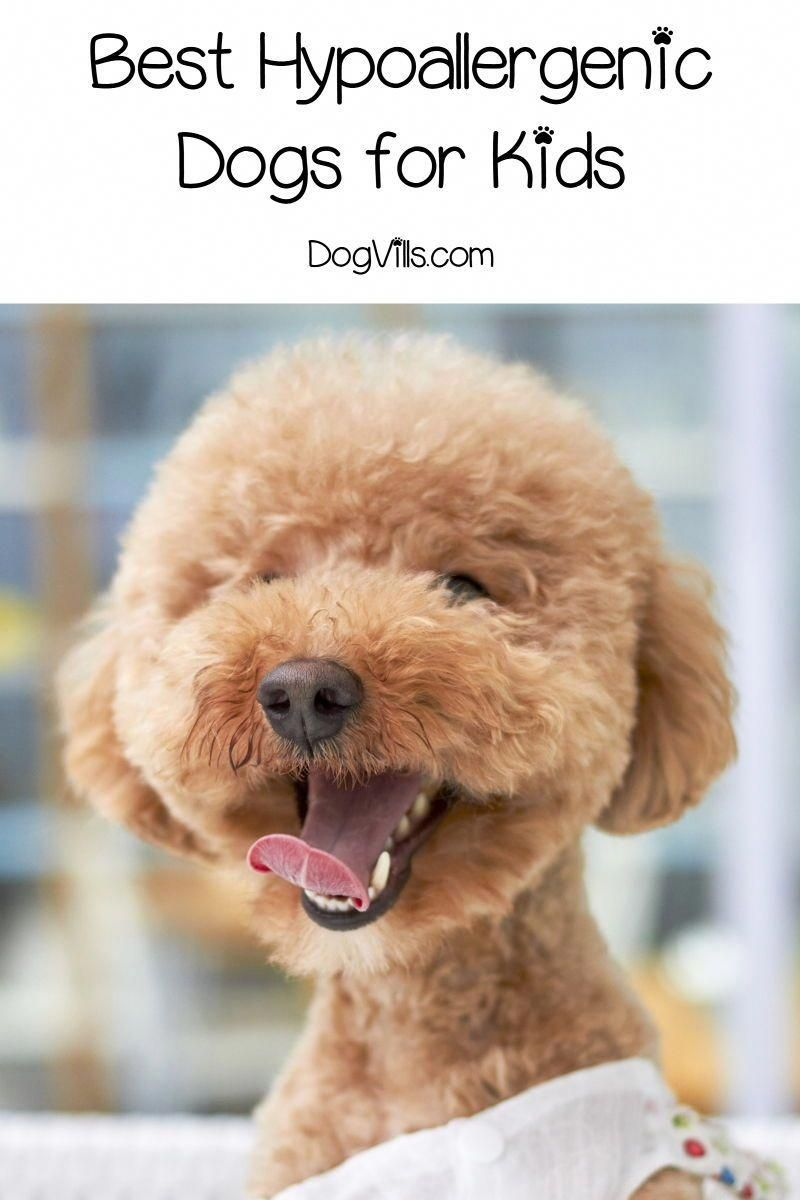 Low Cost Dog Dental Care Refferal 1127820314 Puppy Biting Training Your Dog Dog Training