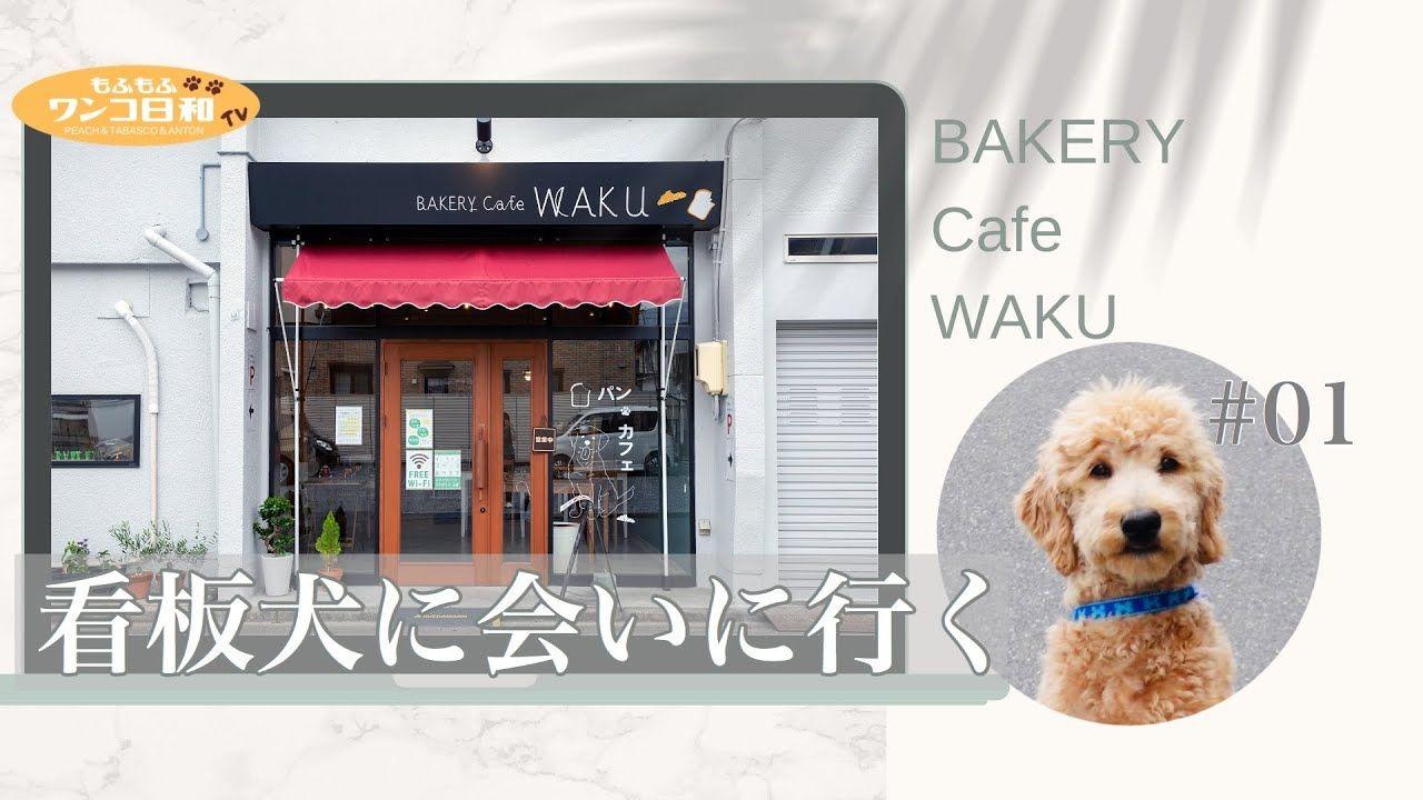 看板犬 話題の人気犬種 ゴールデンドゥードルに会ってきた 長野県松本市 Bakery Cafe Waku Youtube カフェ 看板 犬 看板