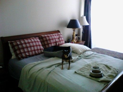 Lucy on Bed