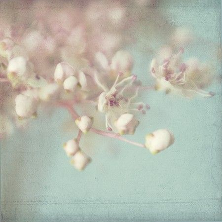soft focus flower photography - Google Search