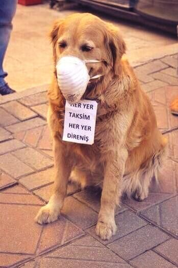 Turkish protesters dog, Istanbul protest Taksim square