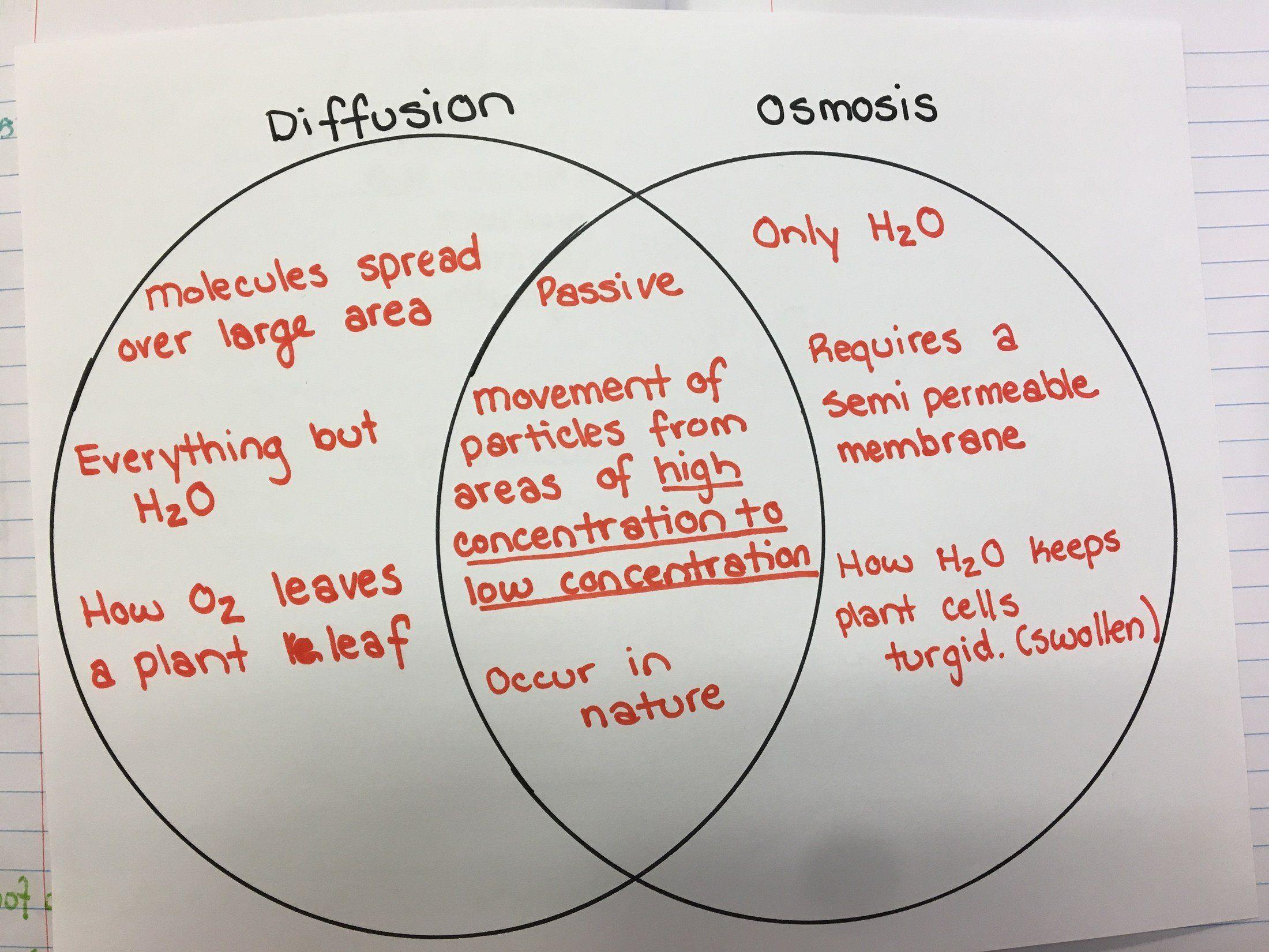 Osmosis Worksheet Answer Key Venn Diagram Of Osmosis And