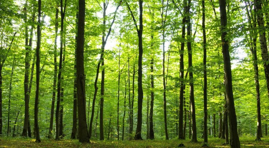 Cooperative forestry act celebrates 40 years of helping