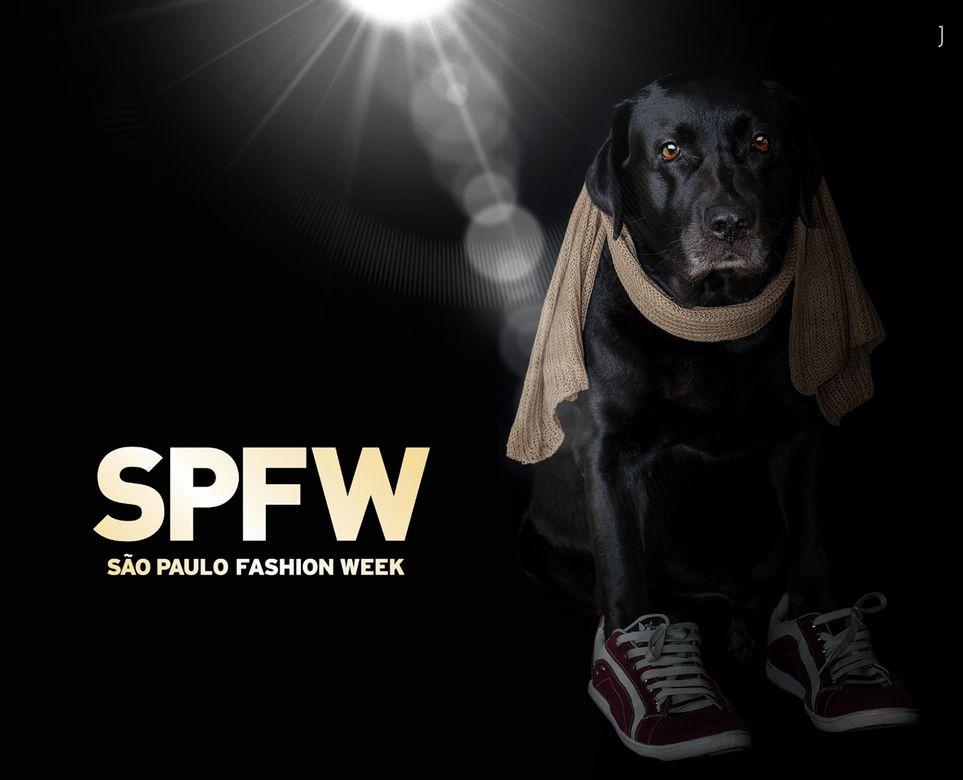 São Paulo Fashion Week 2016... O Diesel tem que estar em todas né... aff  #partiuspfw #spwf #spfw2016 #meudogdiesel #labrador by jrcdaniel