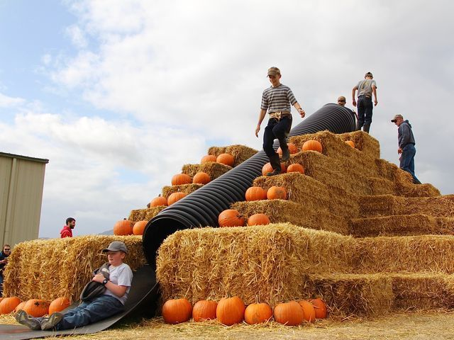 Airlie Hills Farm, expands from pumpkin patch to harvest festival #pumpkinpatch