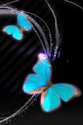 Butterfly HD Wallpaper Free Download Butterfuly