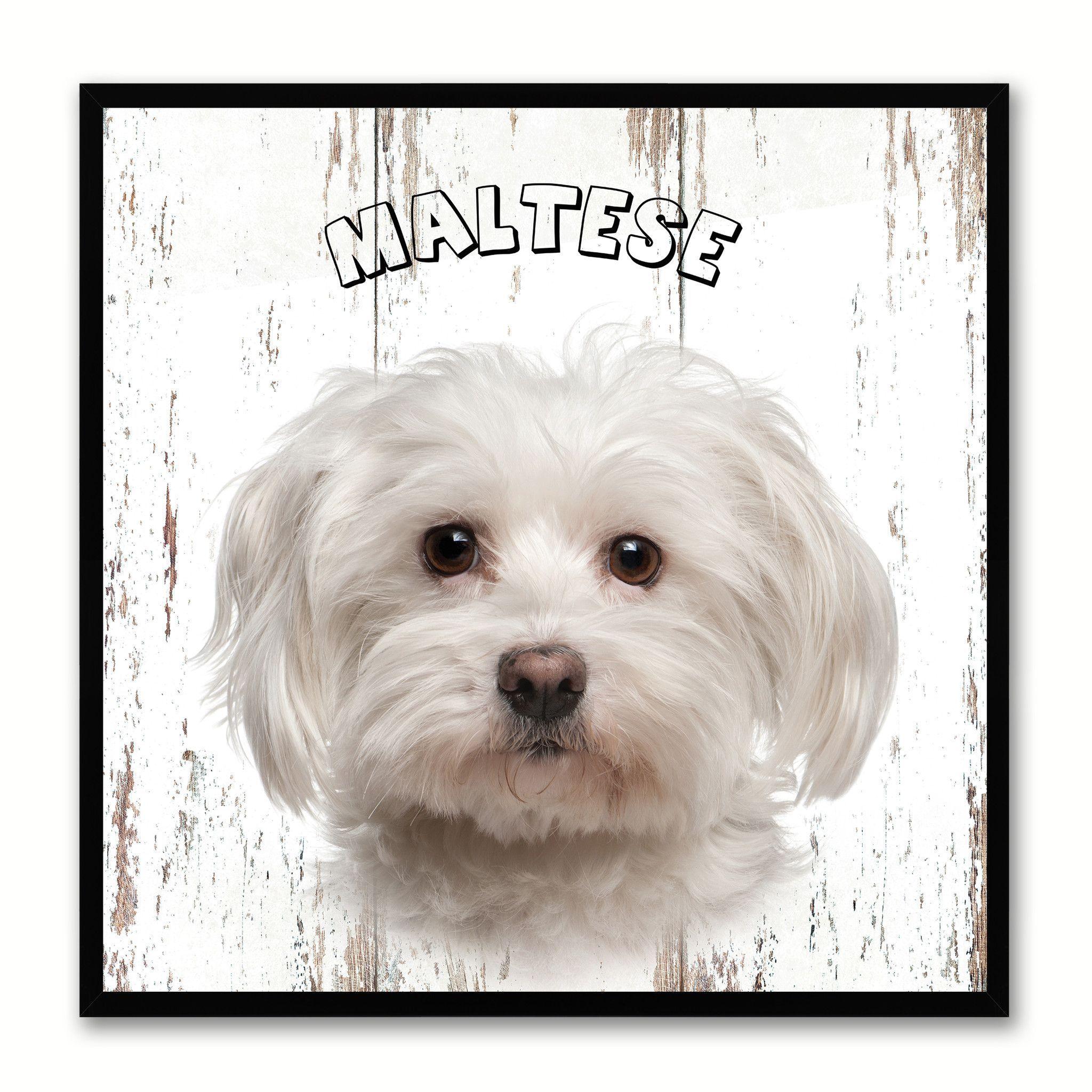 Maltese Dog Canvas Print Picture Frame Gift Home Decor Wall Art Decoratio Maltese Dog Canvas Print Picture Frame Gift Home Dec Maltese Dogs Dog Canvas Maltese