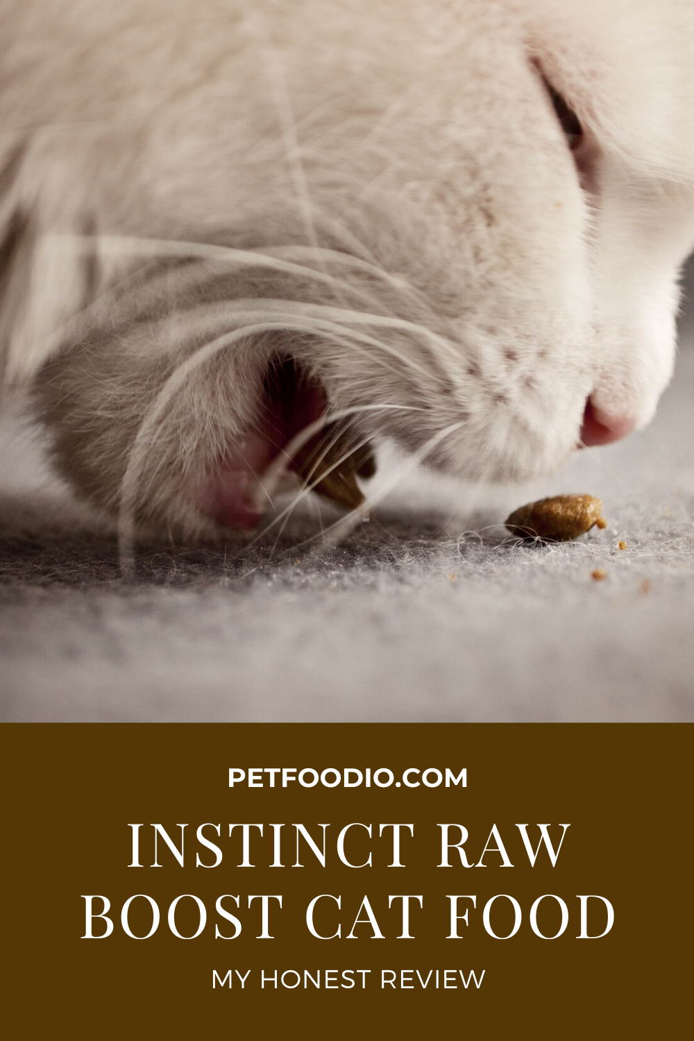 Pin On Healthy Cat Food