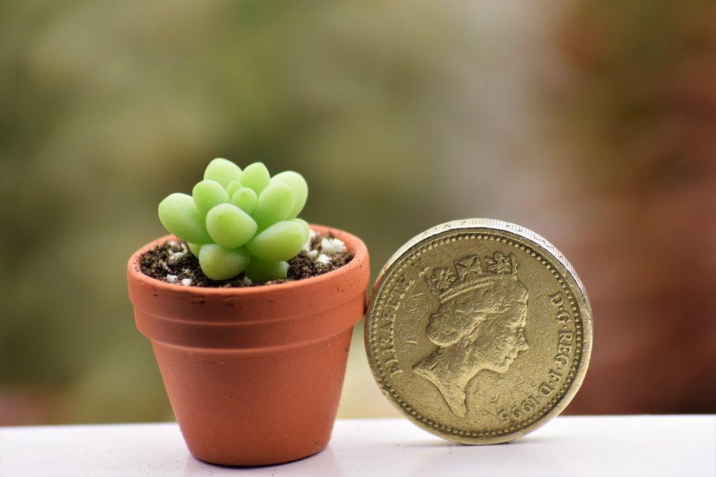 Because Every Tiny Plant Deserves A Tiny Terracotta Pot Succulents Tiny Plants Succulent Pots Perfect Plants