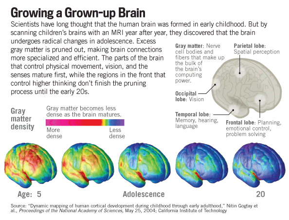 The Adolescent Brain Why Executive >> How To Deploy The Amazing Power Of The Teen Brain Keep Learning