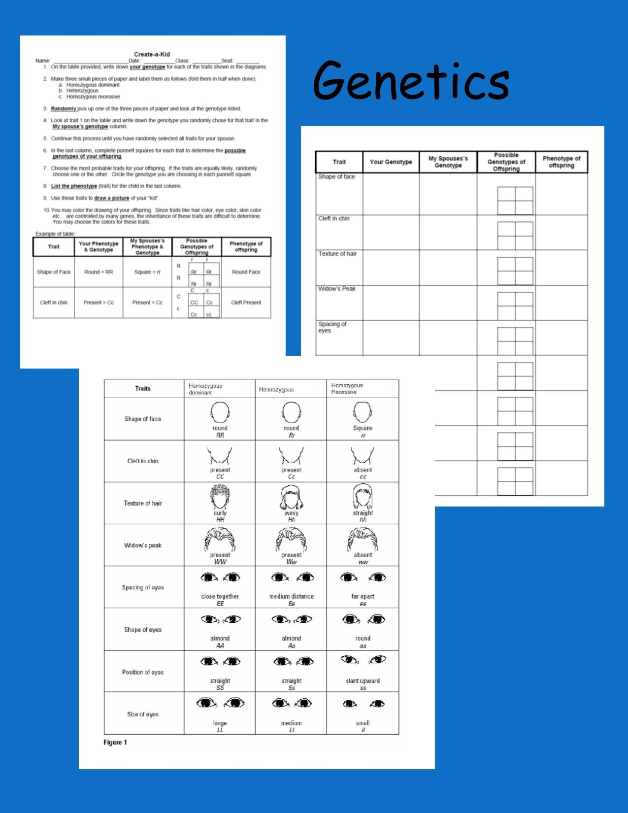 Punnett Square Activity With Images