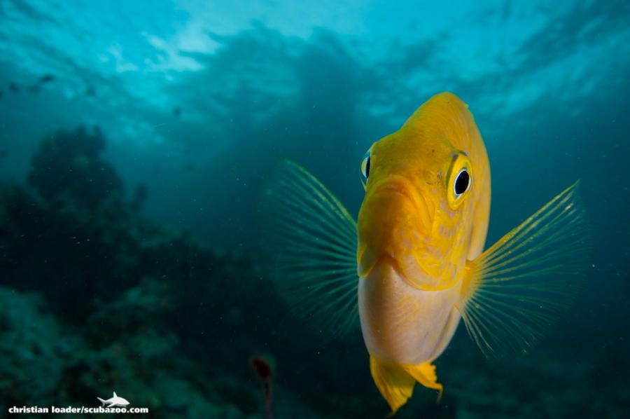 Spread Your Fins by Christian Loader / 500px