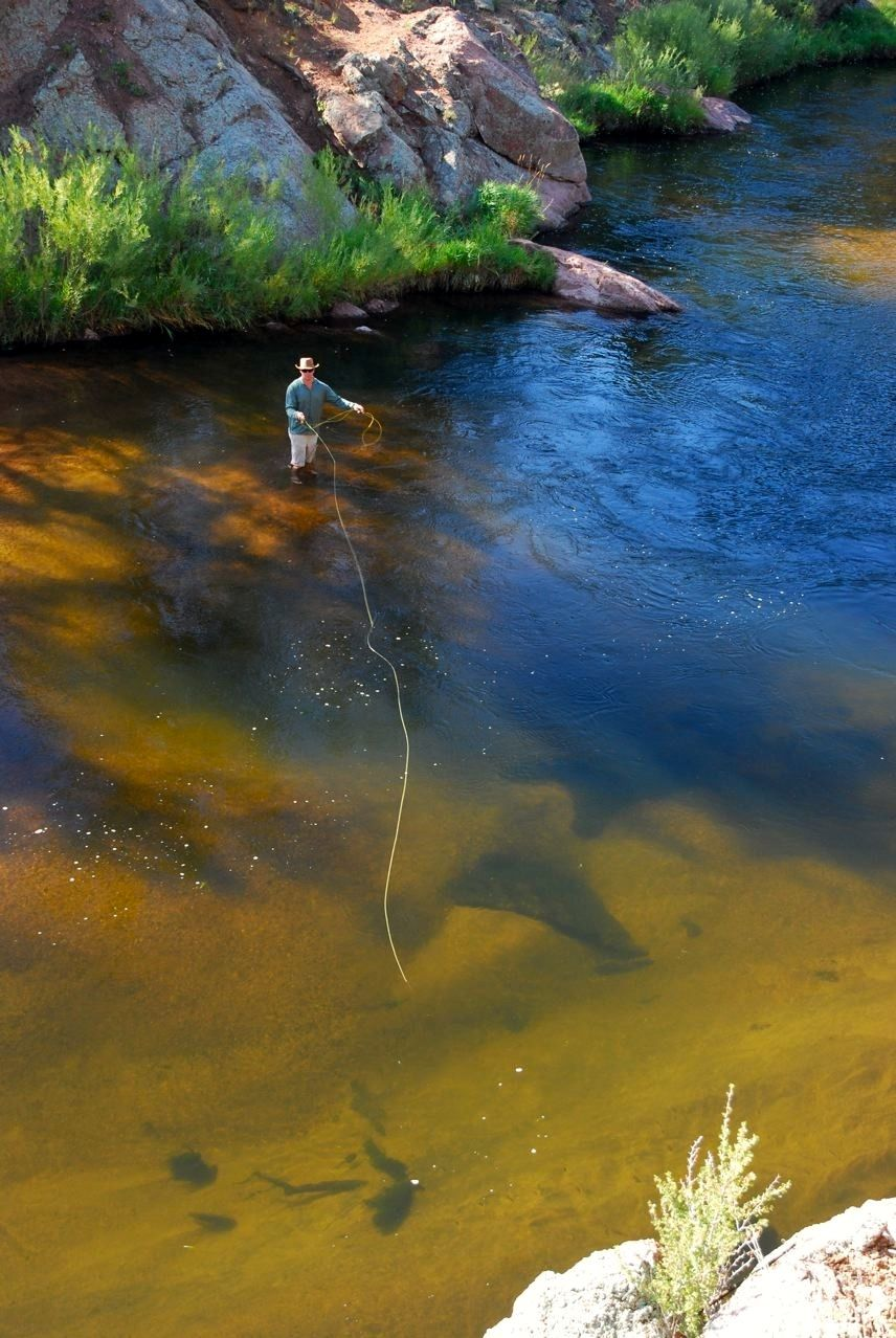 Rise shine 28 photos trout monsters and rivers for Rising fly fishing
