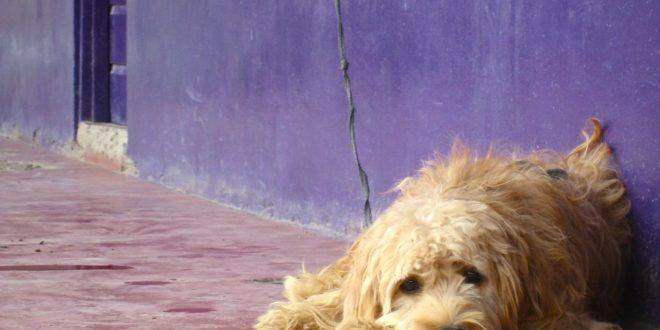 Vibo Valentia: cane impiccato a una ringhiera, trovato agonizzante