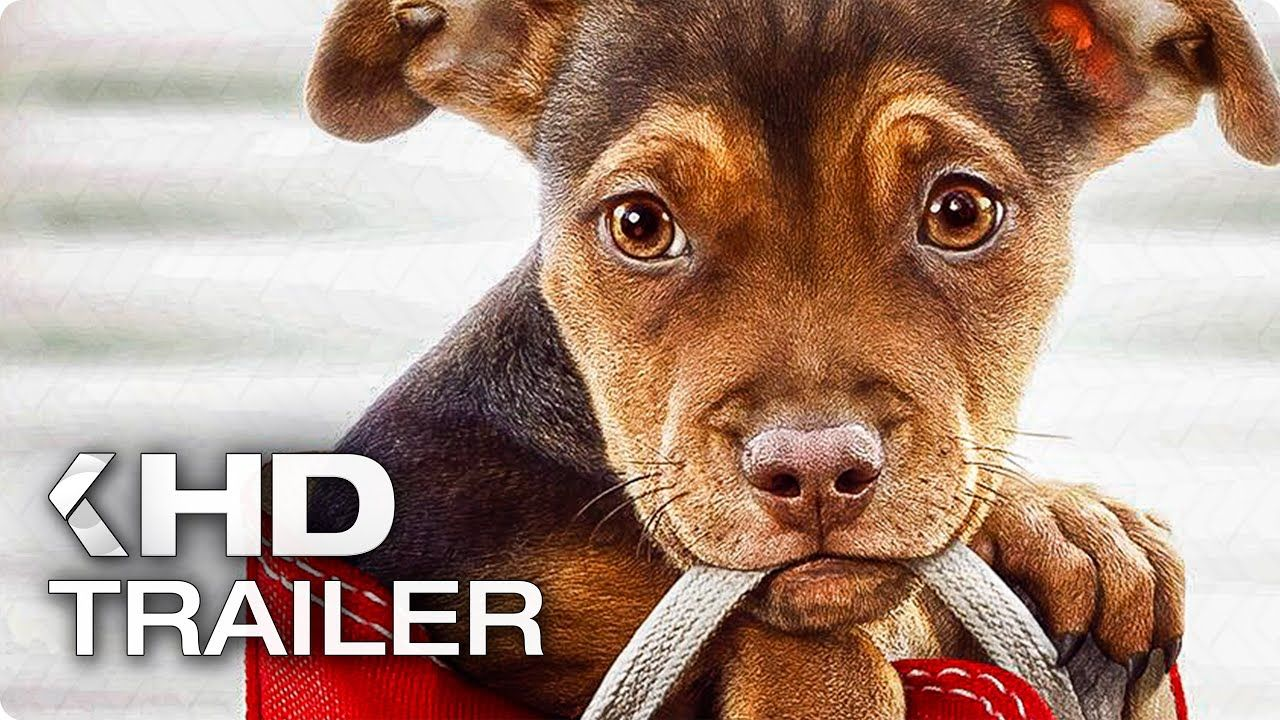 A DOG'S WAY HOME Trailer (2019) YouTube Dog films