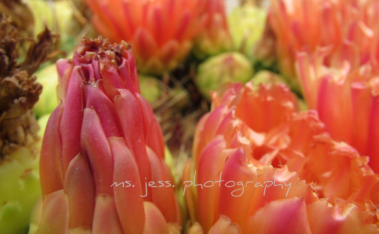 ms.jess. Photography, Jewelry, Fashion