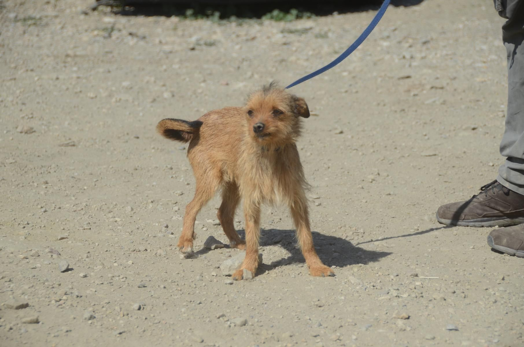 Hund Mischling Mischling Hundin 2 Jahre Spanien Mora Lieber Zwerg Tiere Suchen Ein Zuhause Haustier Susse Tiere