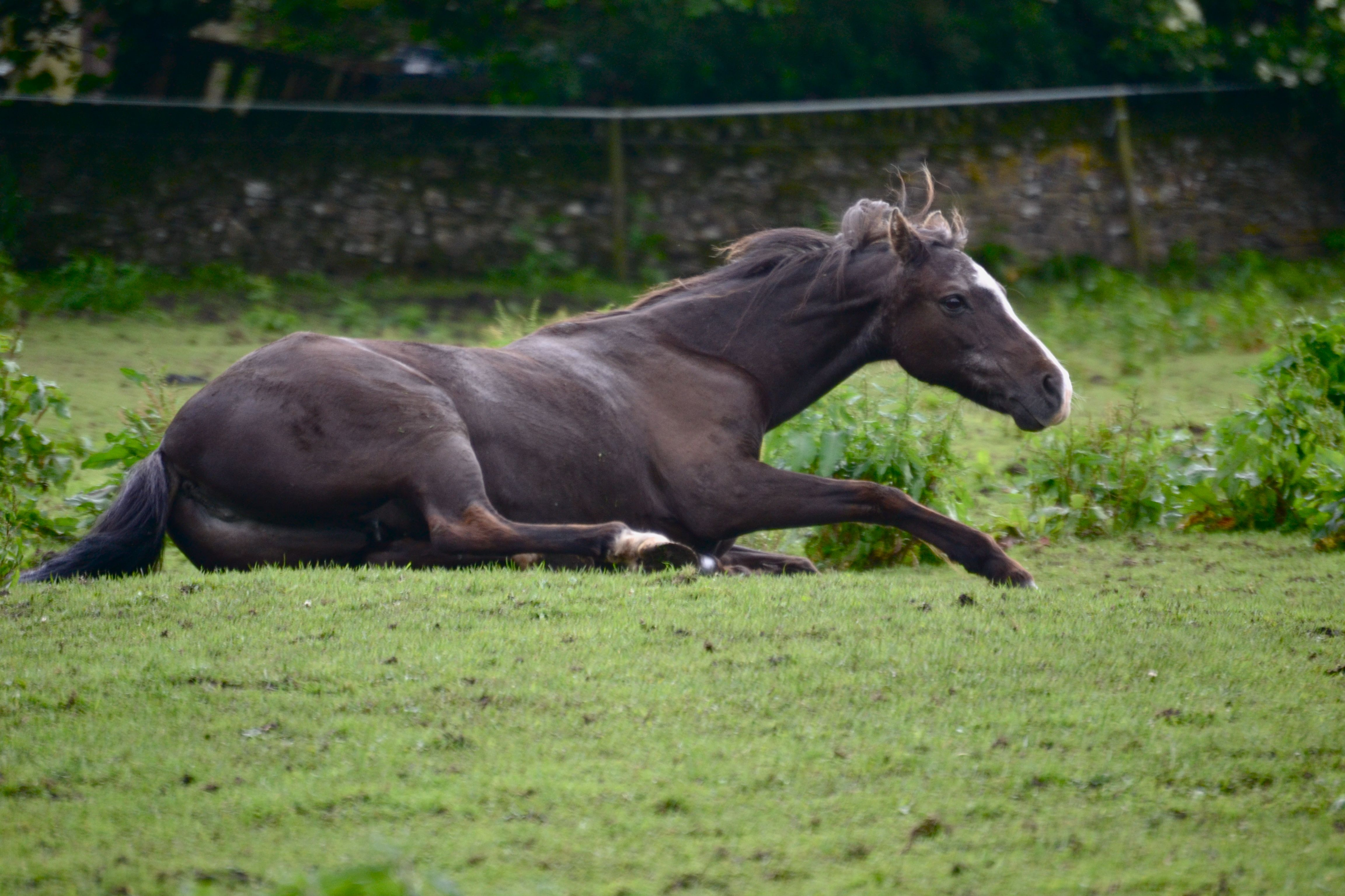 What colour is/are your horse/s   Page 18   Horse and Hound Forum