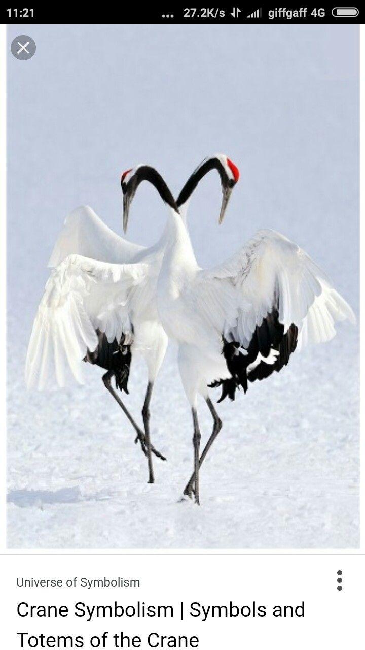 Dancing Japanese Cranes Printing Pinterest Japanese And Dancing