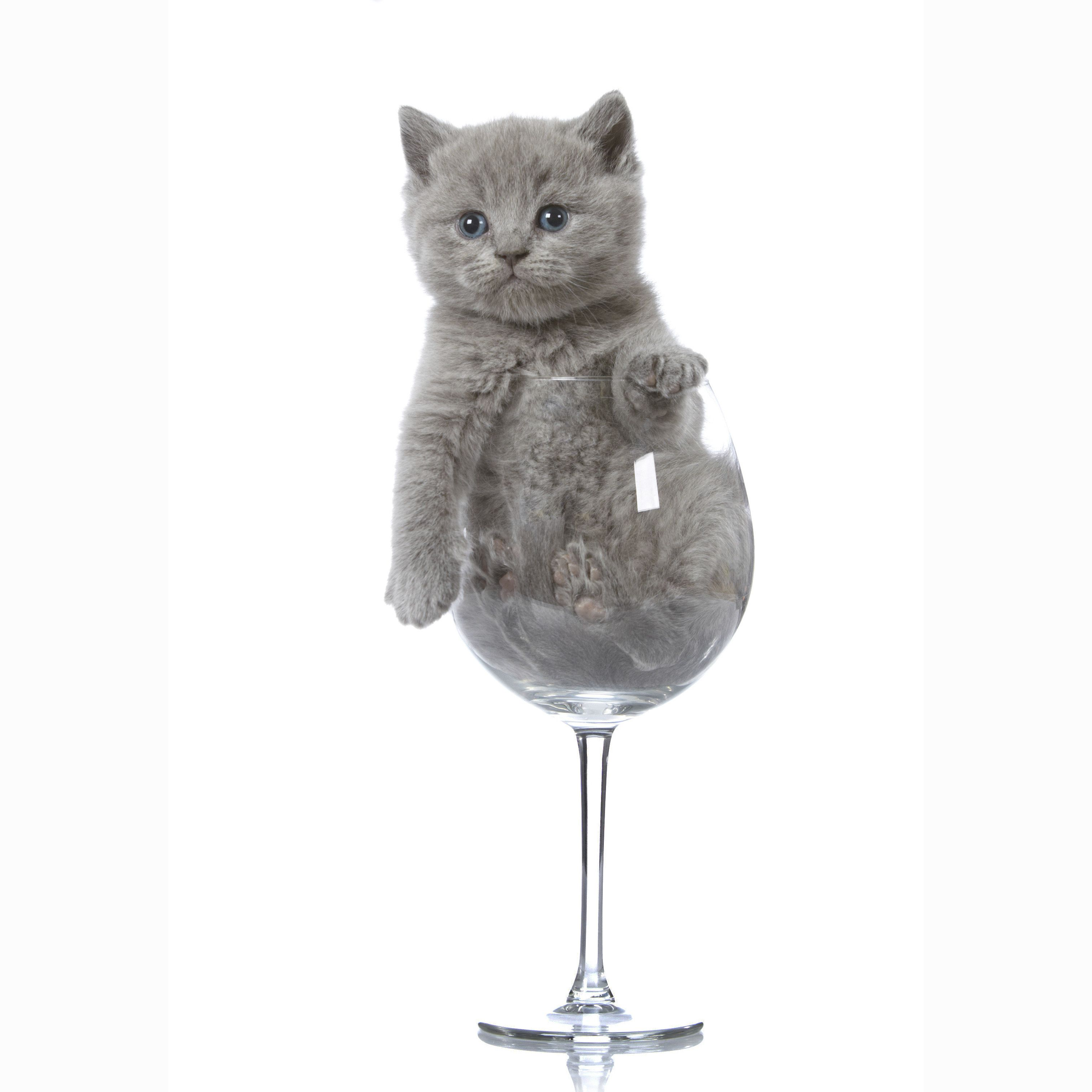 These Cat Parfaits Are Everything You Could Want In A Dessert British Shorthair Cats British Shorthair Kittens British Shorthair