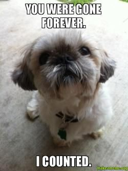 how to tell if your dog is happy shih tzu