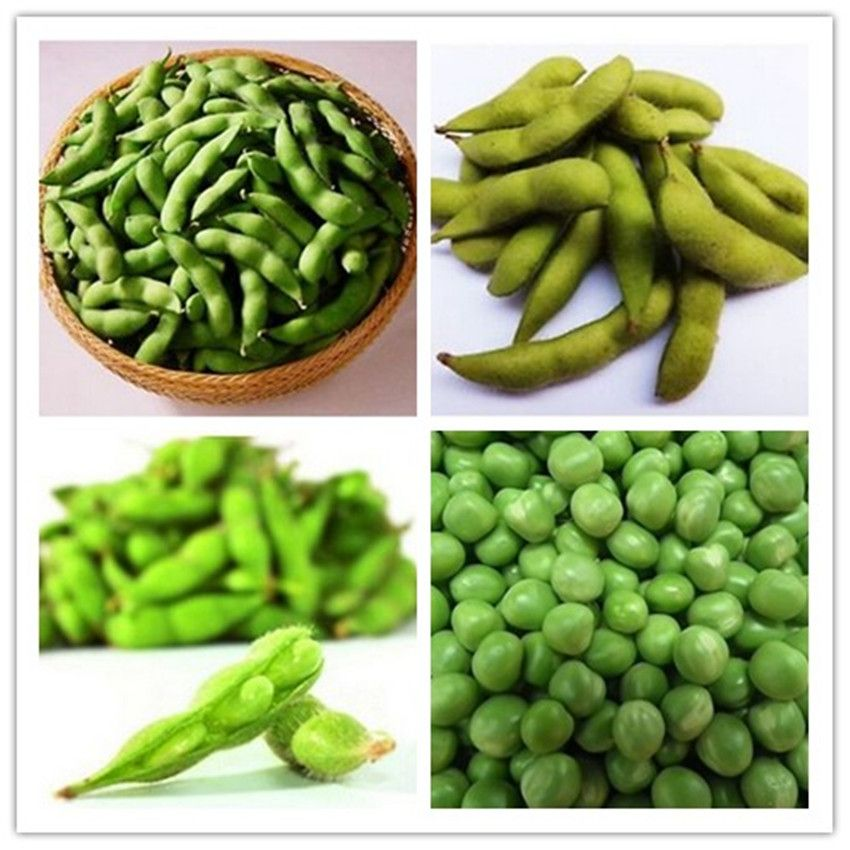 1pack50 Seed Soybean Seeds Green Soy Bean Glycine Edamame