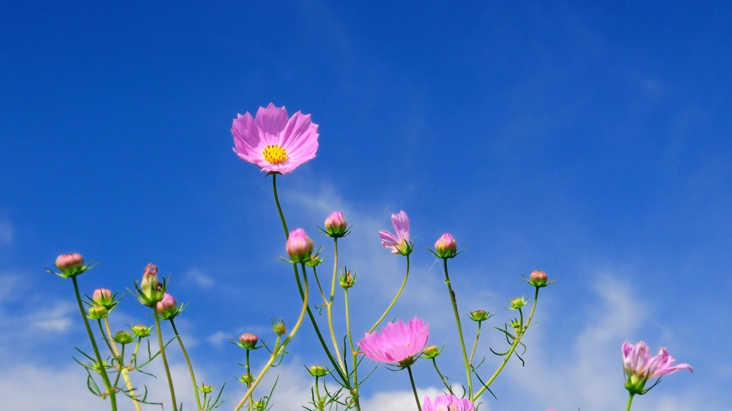 Flower wallpaper image by Sharyn Nicodemus on Flowers ...