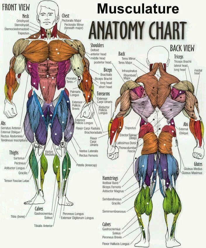 Pin by Srishti Jain on Physiotherapy | Pinterest | Flexibility