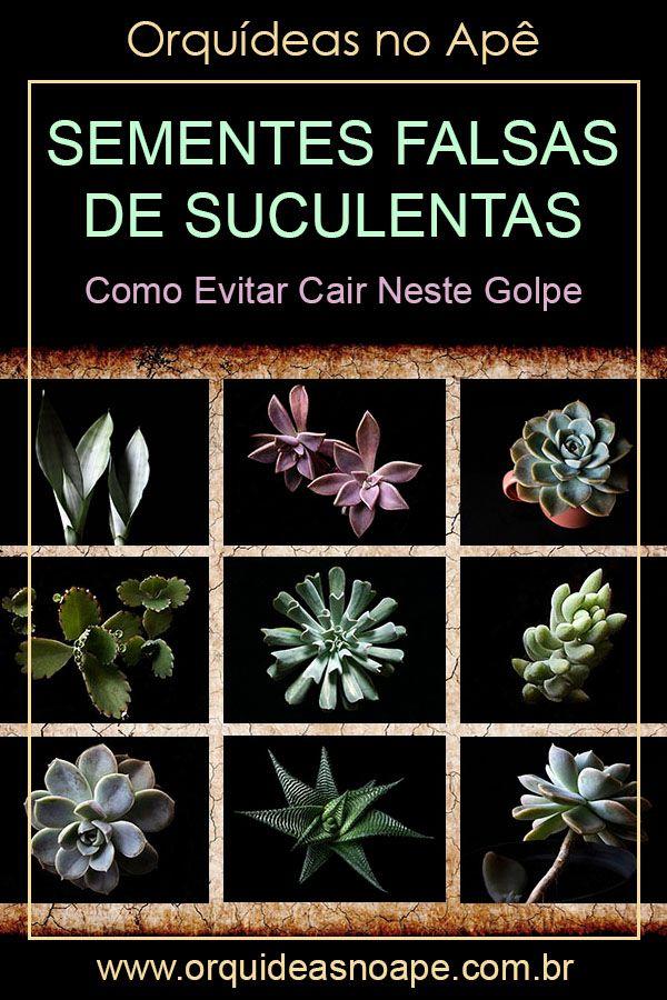 Importantes cuidados a serem tomados ao comprarmos sementes de suculentas. #suculentas #orquideasnoape
