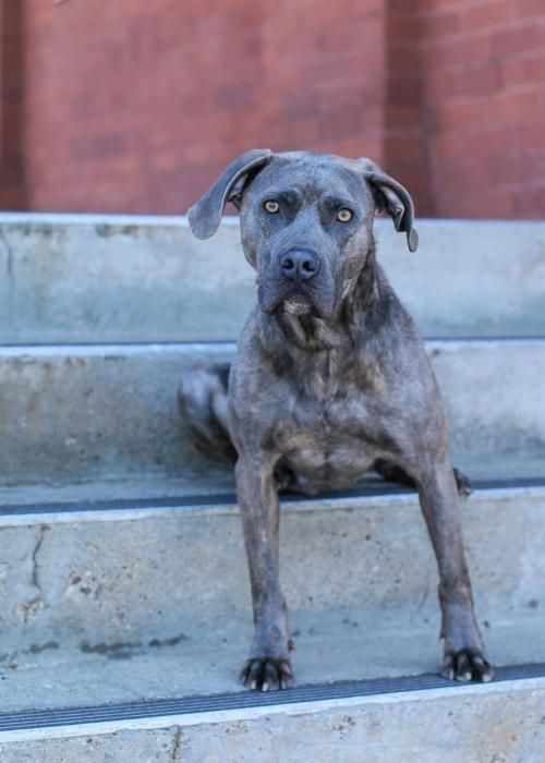 This Lonely Dog Needs A Home Thanks For Sharing American