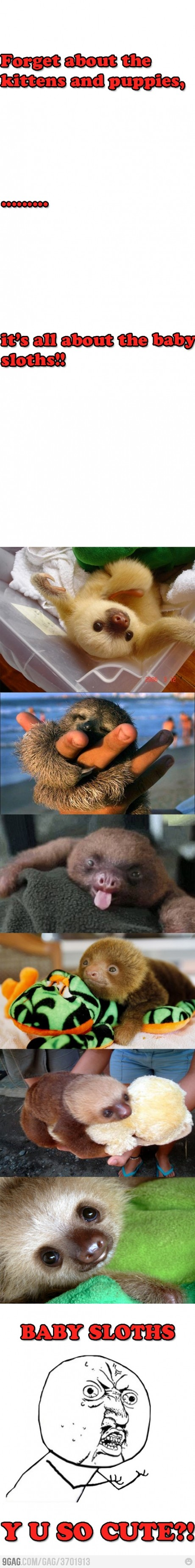 """""""Forget about the kittens and puppies…""""  Me: """"Yeah, whatever.""""  """"It's all about the baby sloths?""""  Me: """"The what now?"""" /8l  …  Me: /O0O\"""