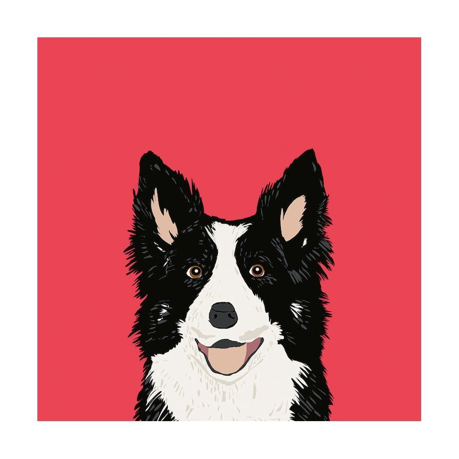 Border Collie Graphic Art On Wrapped Canvas Border Collie Art Dog Lovers Art Border Collie
