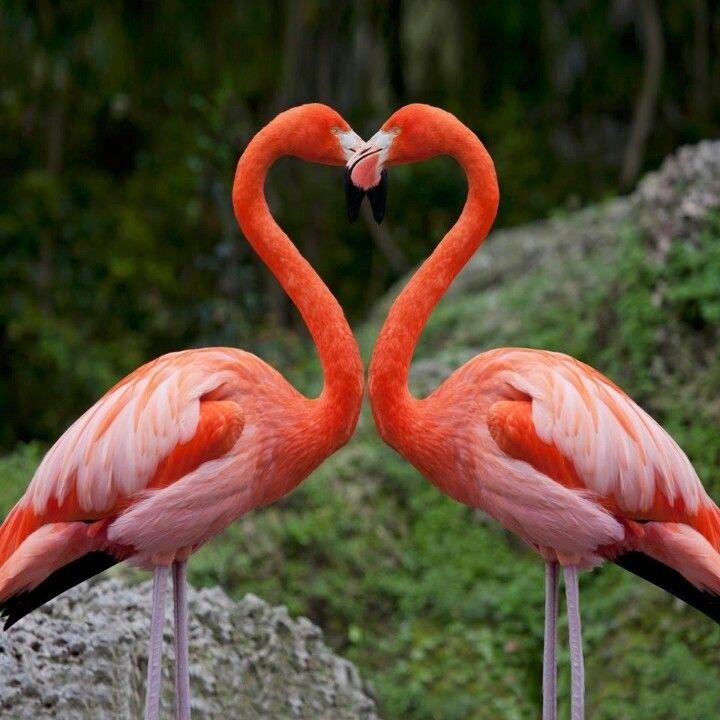 image 720×720 pixels   Розовая птица, Фотоохота, Красивые птицы