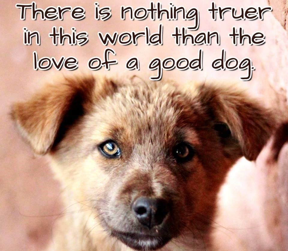 Quotes About Dog Friendship There Is Nothing Truer In This World Than The Love Of A Good Dog